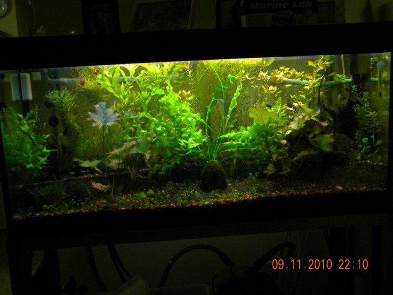 Aquascaping World Competition Gallery Jungle By Avi Segal