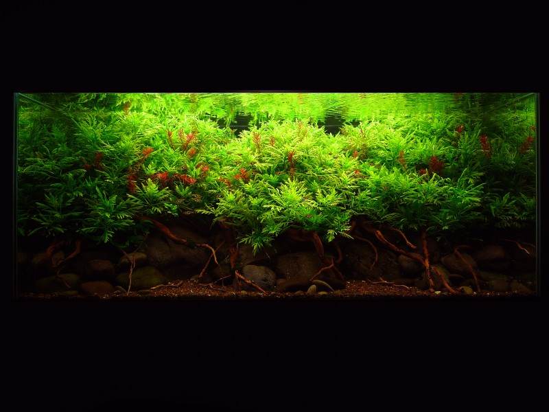 Aquascaping World Competition Gallery Mekong By Bonetti Pascal