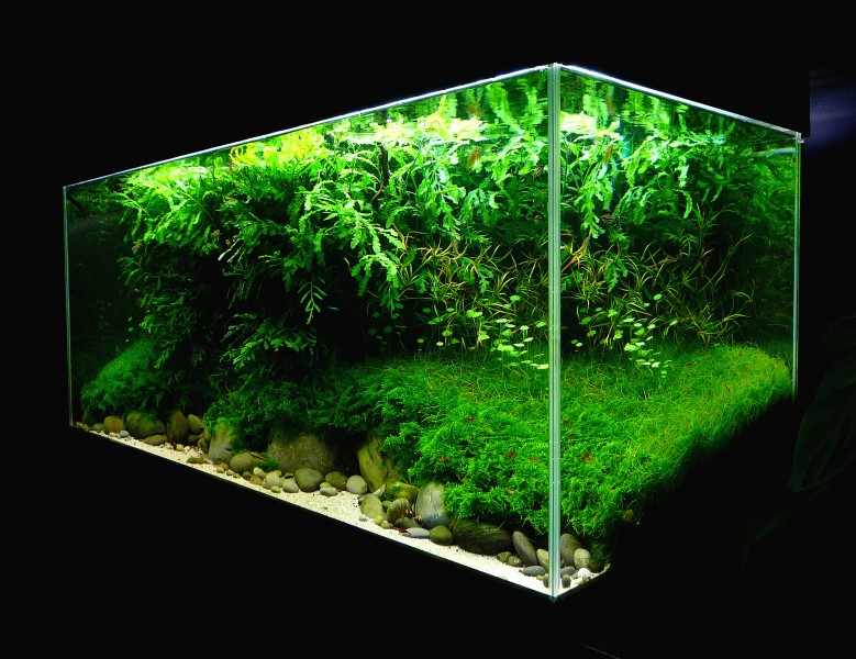 Aquascaping World Competition - Gallery - Erosion by BONETTI Pascal