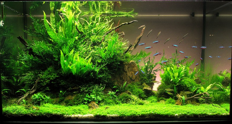 Aquascaping world competition gallery - Gallery aquascape ...