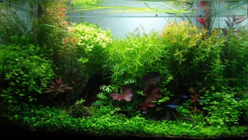 Aquascaping World Competition Gallery Zazil H 225 By Romel De La Cruz Cedillo