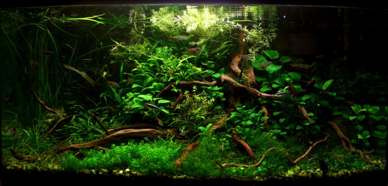 Aquascaping World Competition Gallery Mystical Wilderness By Jovanovic Bosko