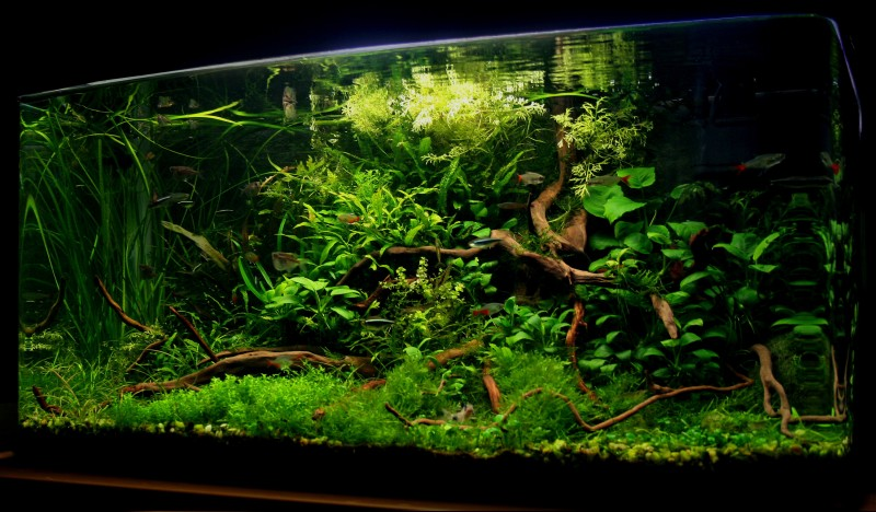 Aquascaping world competition gallery mystical wilderness by jovanovic bosko - Gallery aquascape ...