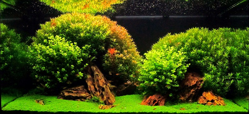 Aswc top 12 aquascapes aquascaping world forum - Aquascape espana ...