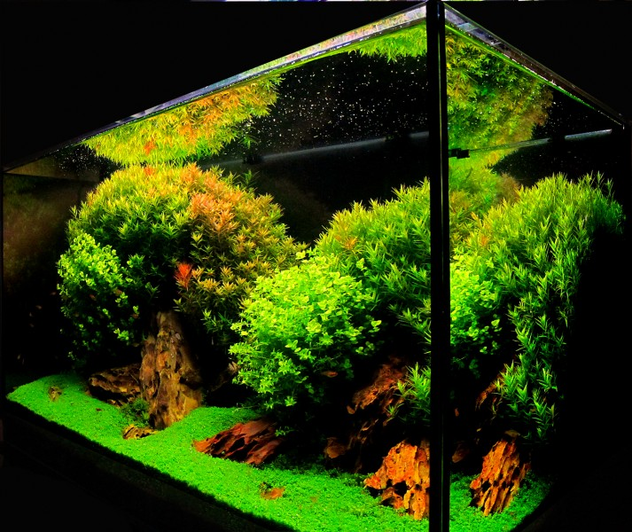 Aquascaping World Competition - Gallery - CCR by Jose Mar?a Conejo ...
