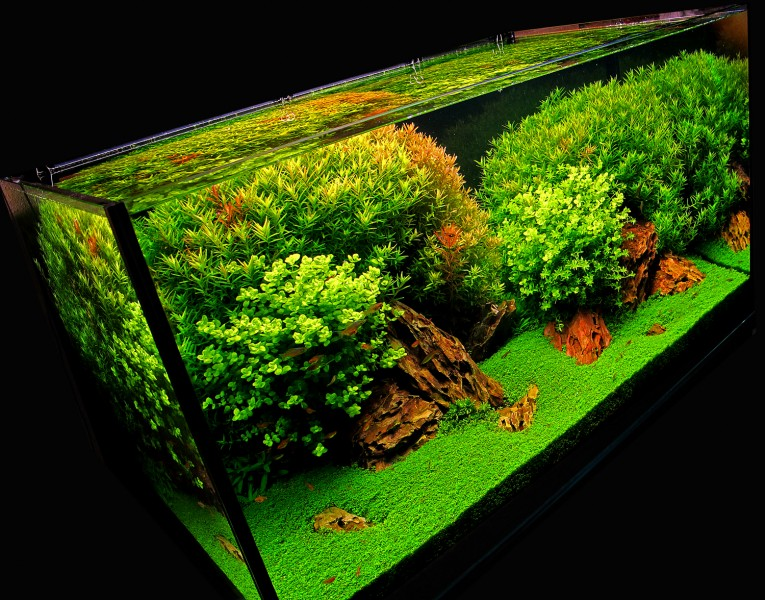Aquascaping World Competition Gallery Ccr By Jos 233 Mar 237 A Conejo G 243 Mez