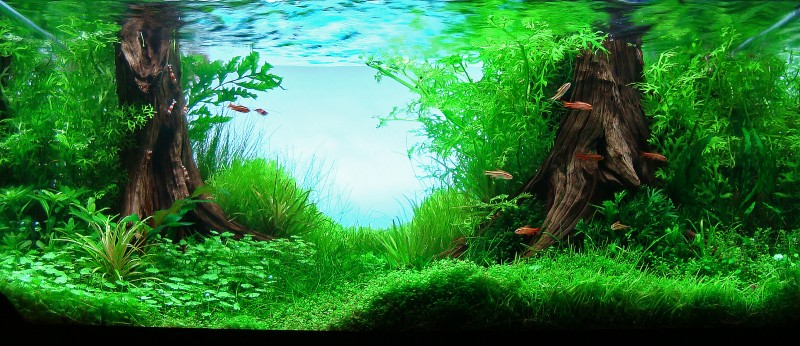 Aquascaping world competition gallery apolo by alberto - Aquascape espana ...