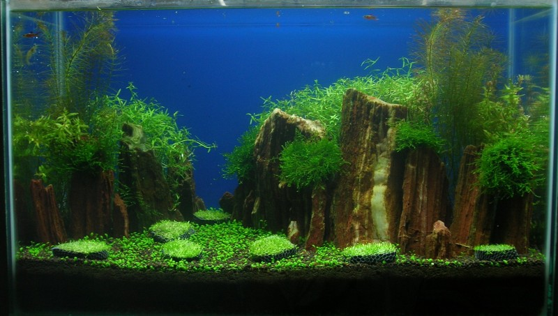 Aquascaping world competition gallery red iwagumi by yun teng fung - Gallery aquascape ...