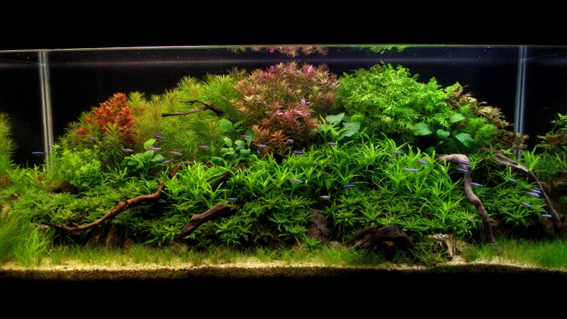 Aquascaping World Competition Gallery Rise Of Nature By Francisco Miranda Contreras
