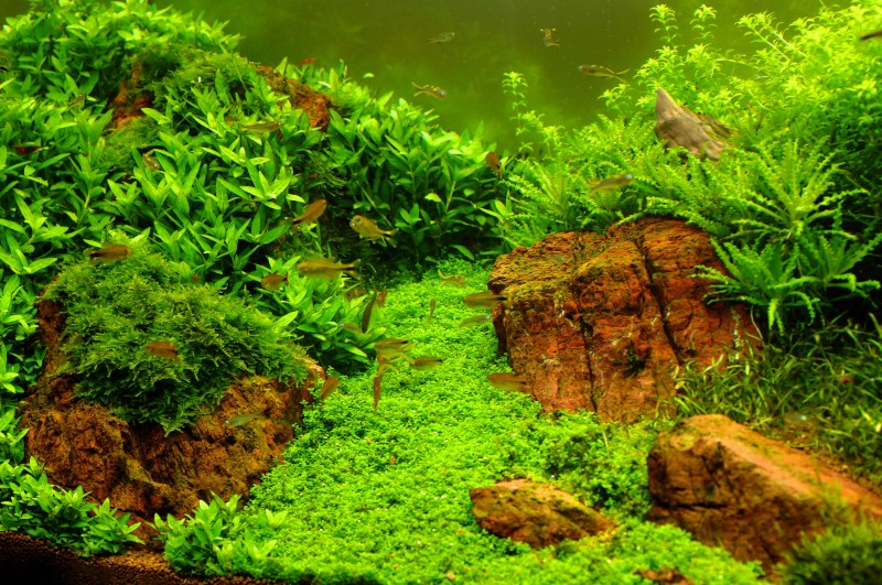 Aquascaping World Competition - Gallery - Slow Motion by Zoltan Koczka