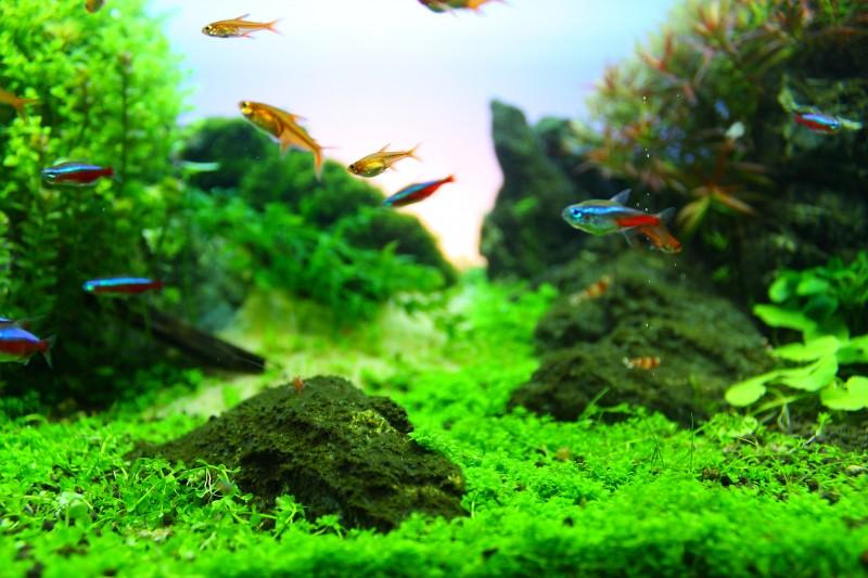 Aquascaping World Competition Gallery Sentiero Di Pietra By Antonio Manfredi Vaquero