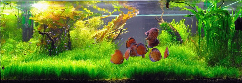 Aquascaping World Competition Gallery Sun Of Cuipeua By Bruno Trimmel