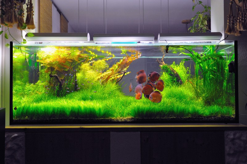 Aquascaping World Competition - Gallery - Sun of Cuipeua by Bruno ...