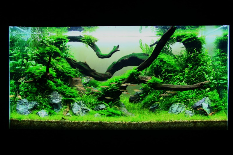 Aquascaping World Competition