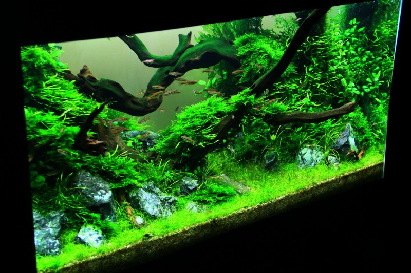 Aquascaping World Competition Gallery The Green Wood By M Saidi Arif