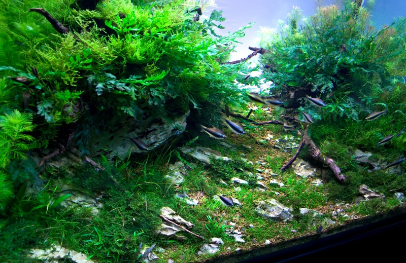 Superior Aquascaping World Competition   Gallery