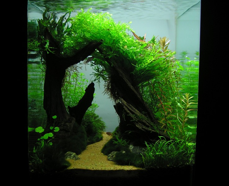 Aquascaping World Competition - Gallery - Sleepy Hollow by Ivan Mikla