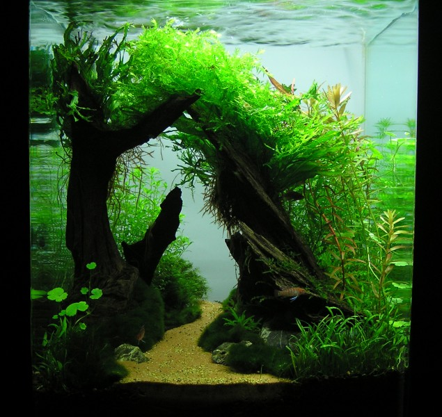 Aquascaping world competition gallery sleepy hollow by ivan mikla - Gallery aquascape ...