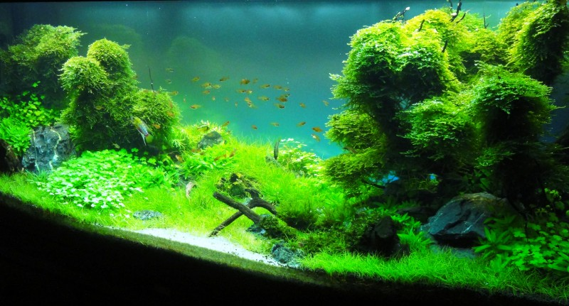 Aquascaping World Competition - Gallery - Magical Forest by Adrie ...