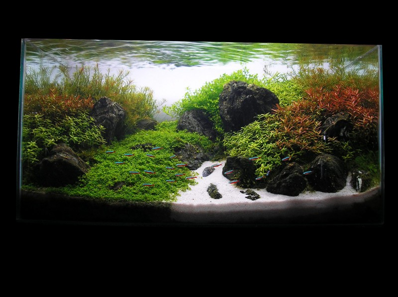 AquaScaping WORLD Competition: Now OPEN!