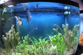 Plymouth Pet & Aquarium