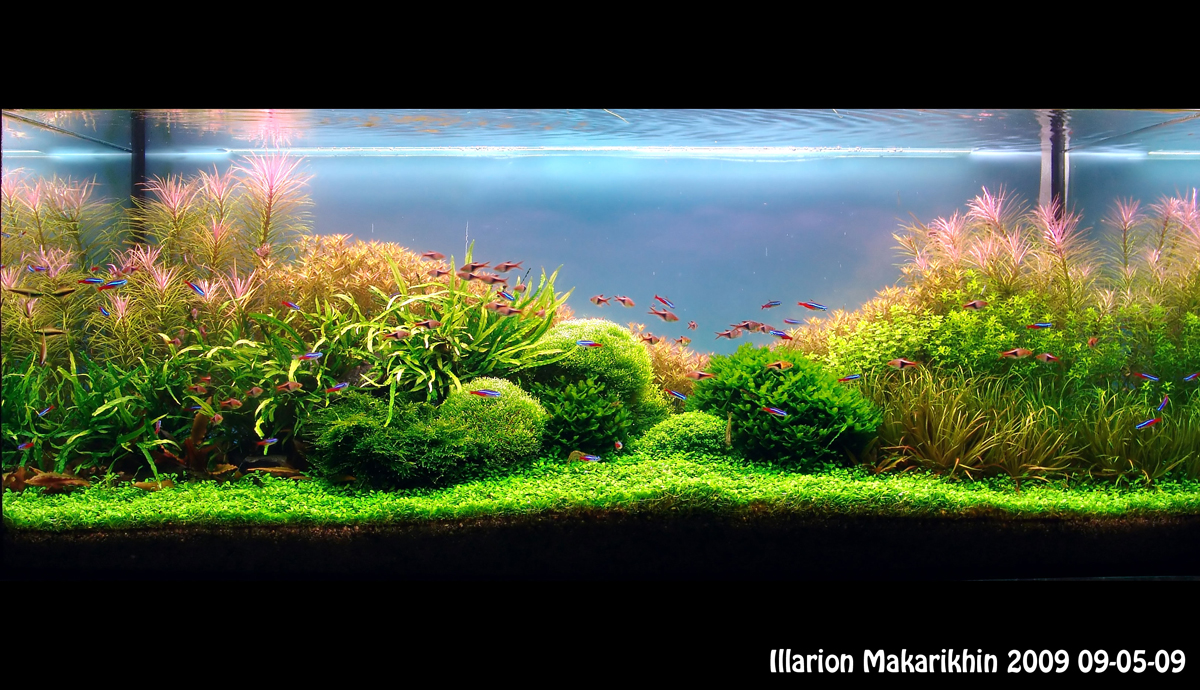 """September 2010 Aquascape of the Month: """"Sky Cliff ..."""