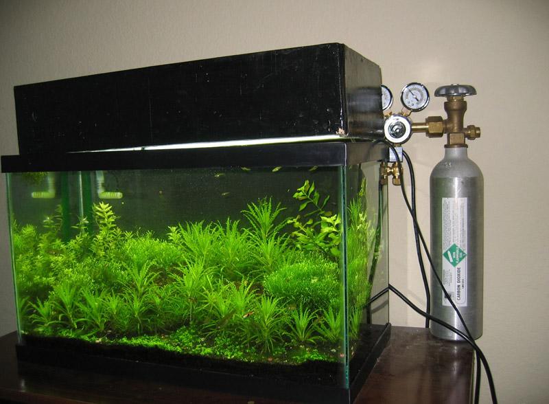 Lighting for 10 gallon tank AquaScaping World Forum