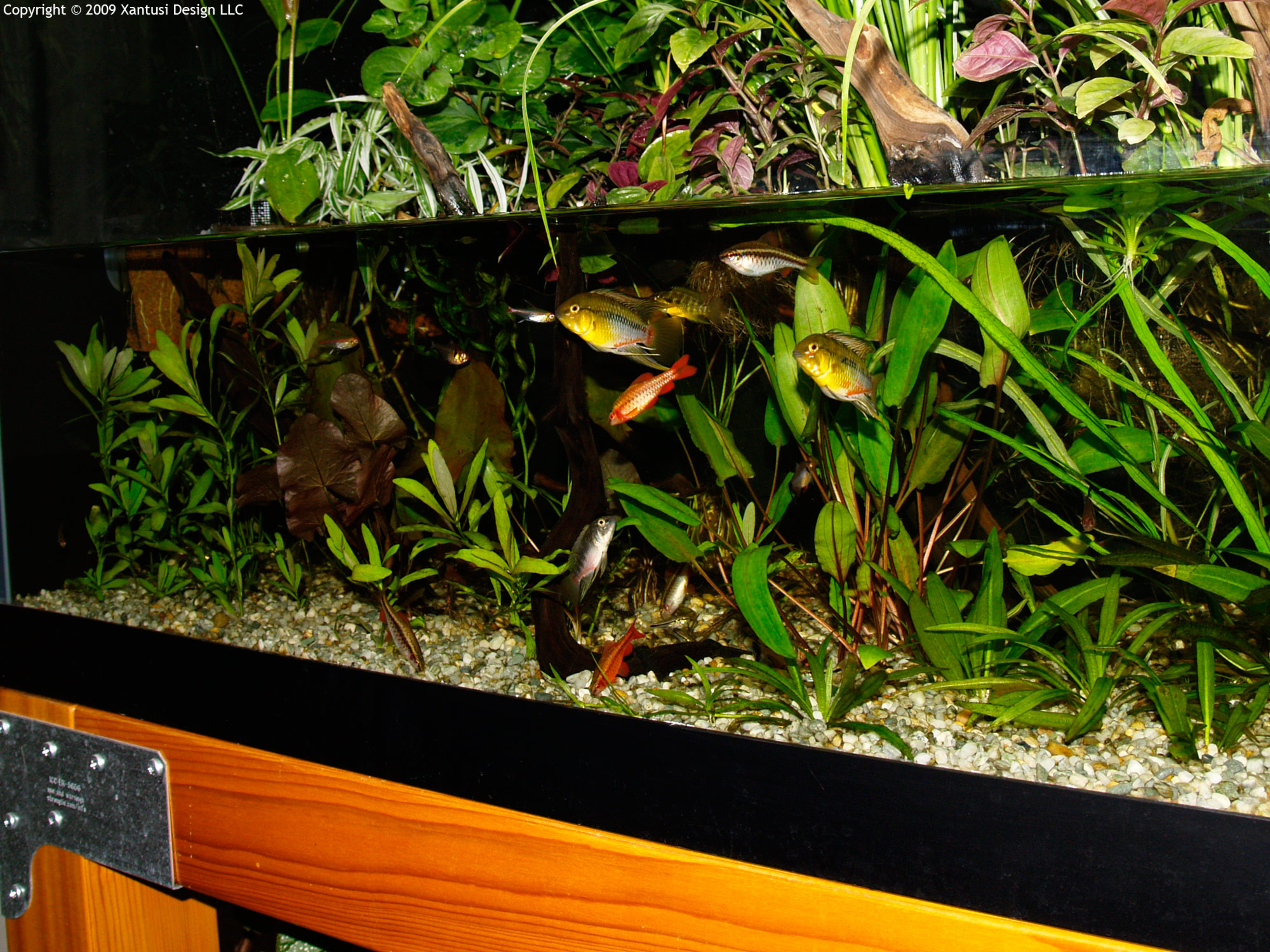 "Tank Trouble 1 >> Aquascape of the Month December 2009: ""South American ..."