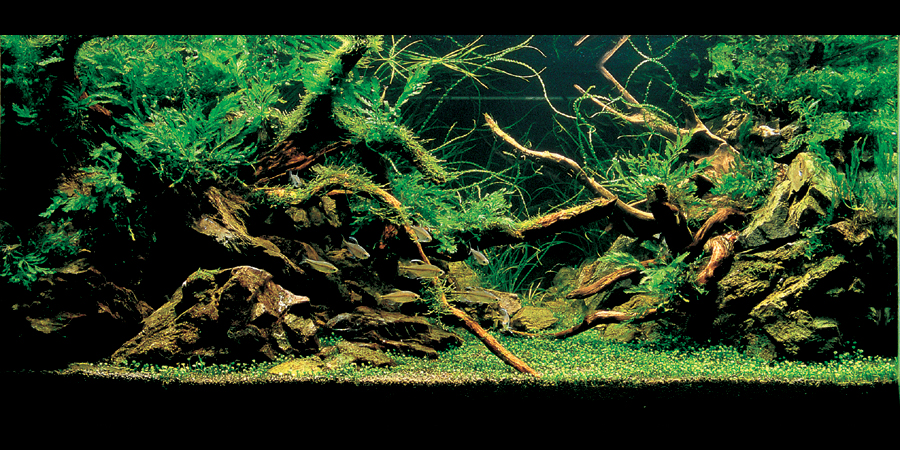 Nature aquarium style aquascapes aquascaping world forum - Gallery aquascape ...