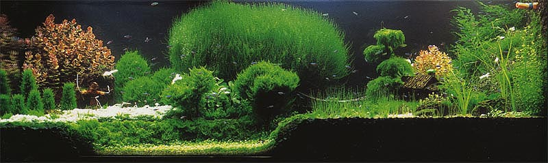 Taiwanese Style Aquascapes Aquascaping World Forum