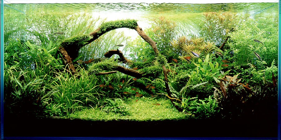 Nature aquarium style aquascapes aquascaping world forum for Natural fish tank
