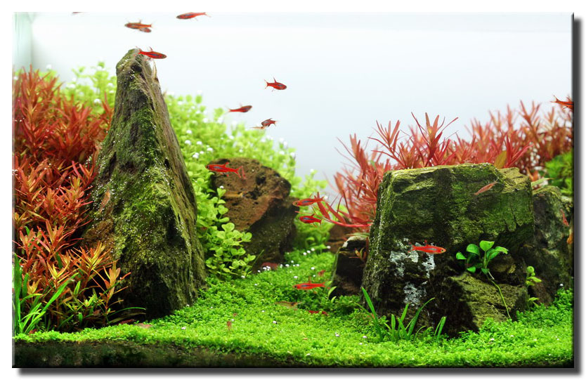 In My Initially Planning, I Looked For The Most Beautiful Aquarium Plants  In The World. I Sought Out Colorful, And Interesting Shaped Plants That  Would ...