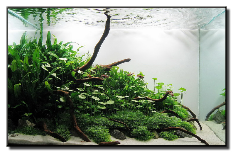 "Aquascape of the Month October 2009: ""Little Green Hill ..."