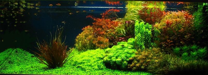 Charming AquaScaping World Forum