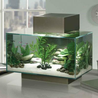 Fluval Edge Aquarium | AquaScaping World Forum