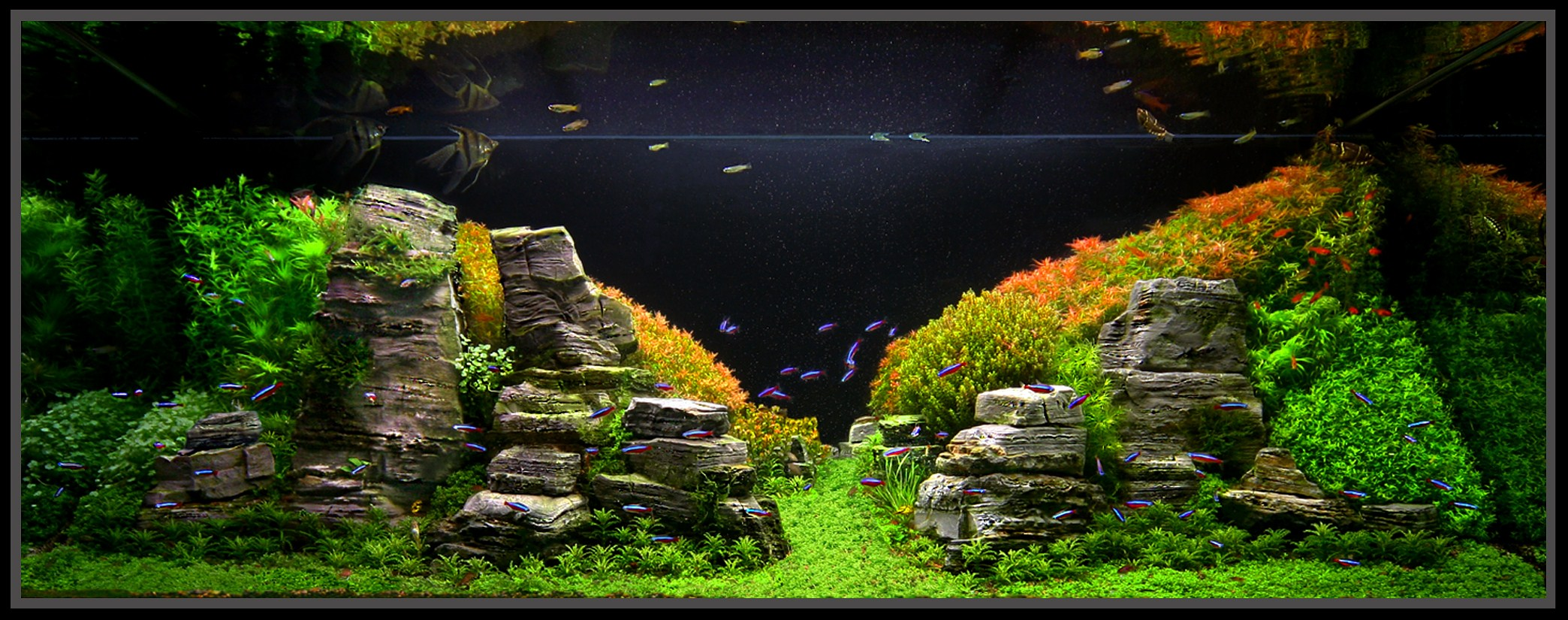 January 2011 Aquascape Of The Month Peruvian Nights Aquascaping World Forum