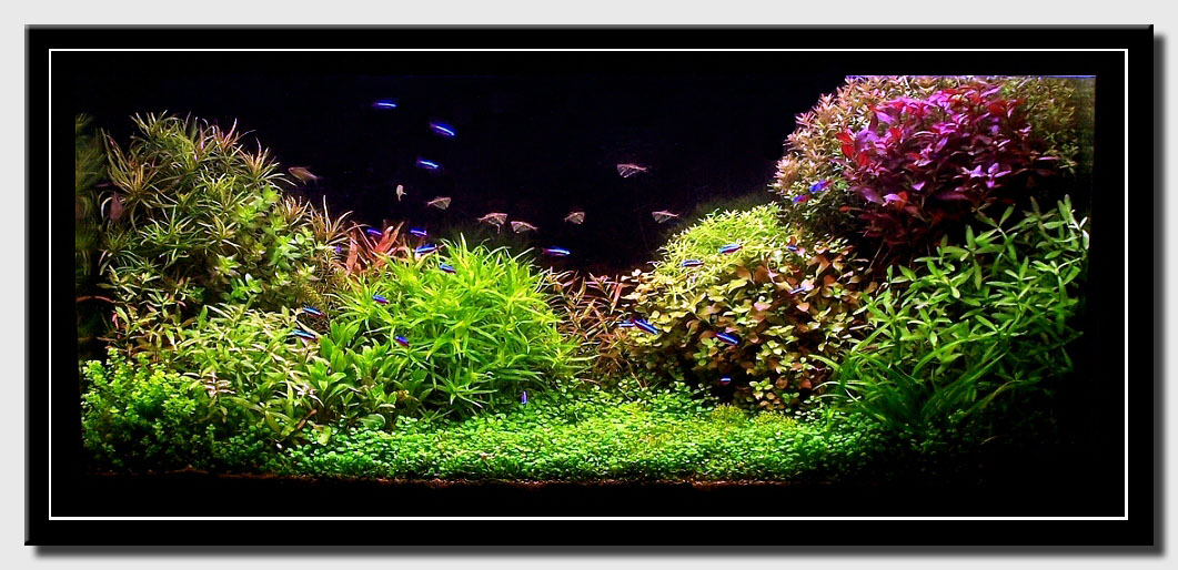 aquascape of the month july 2008 silence a pousse