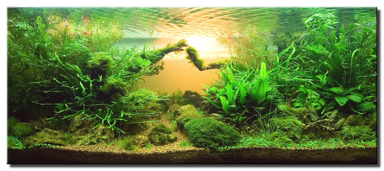 "Aquascape of the Month May 2008: ""My Homeland ..."