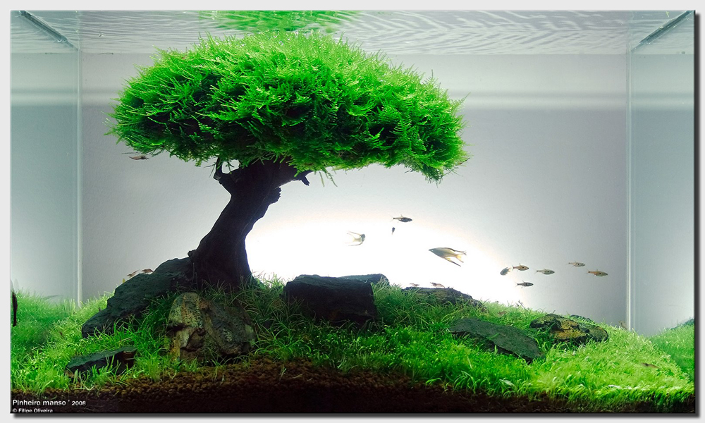 Aquascape Of The Month September 2008 Quot Pinheiro Manso Quot Aquascaping World Forum