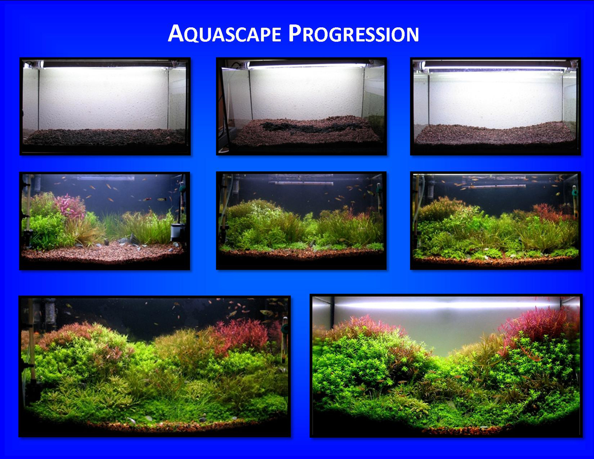 "Aquascape of the Month March 2009: ""Patchwork ..."