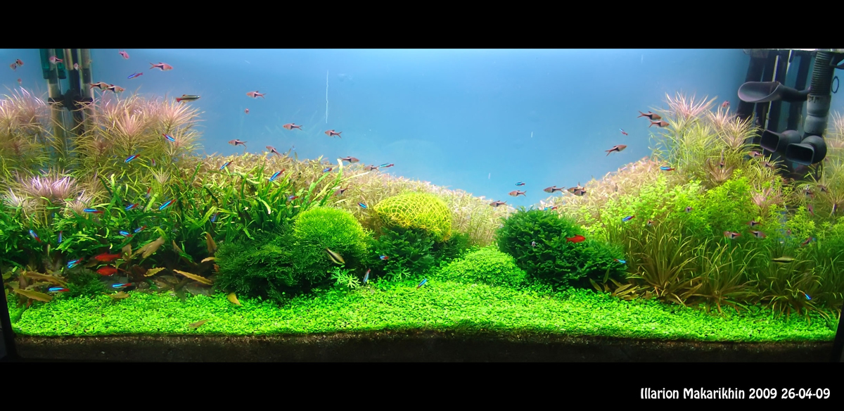 Aquascape Of The Month January 2010 Quot Passage To The Red Forest Quot Aquascaping World Forum
