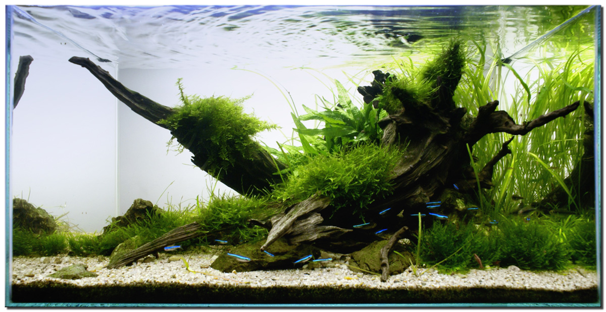 Aquascape of the month november 2009 riverbank for Plante aquarium