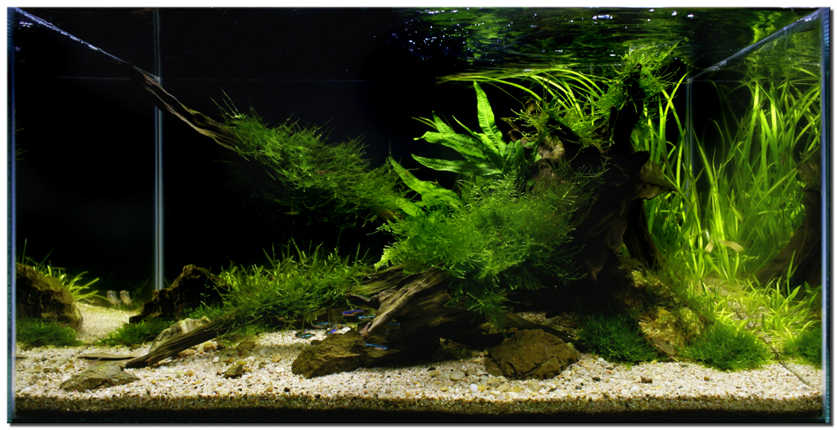 "Aquascape of the Month November 2009: ""Riverbank ..."