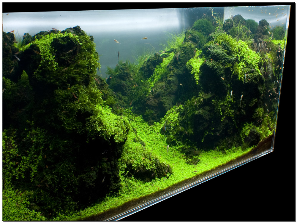 September 2010 aquascape of the month sky cliff aquascaping world forum - Gallery aquascape ...