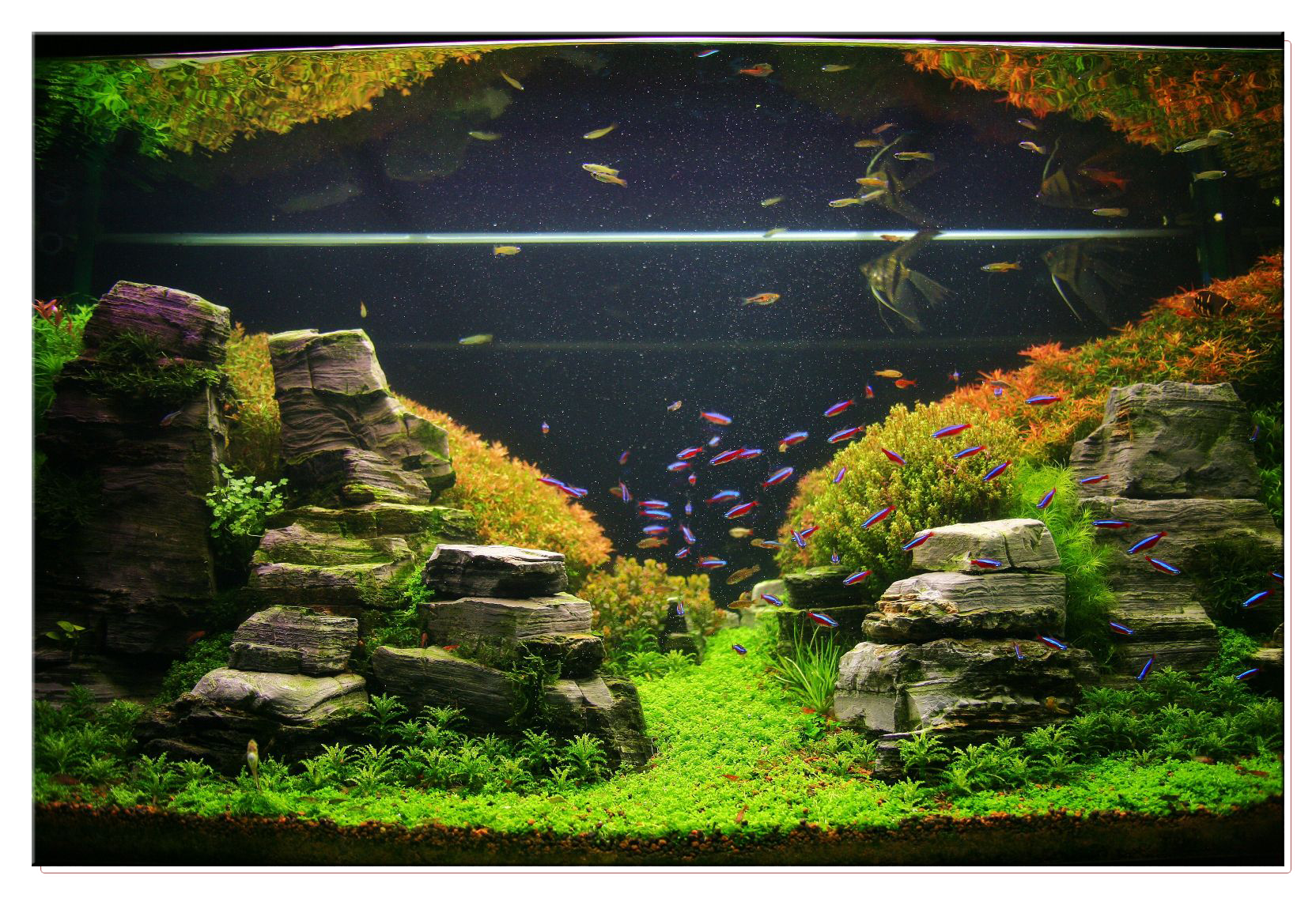 January 2011 aquascape of the month peruvian nights aquascaping world forum - Gallery aquascape ...