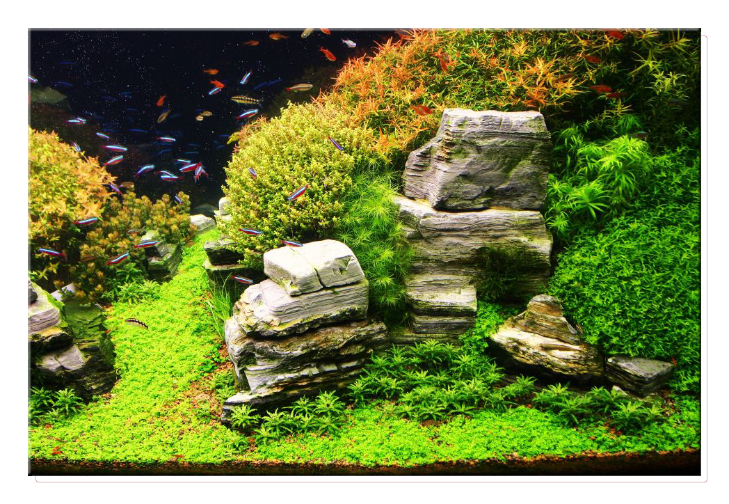 Aquascaping, Aga And Java