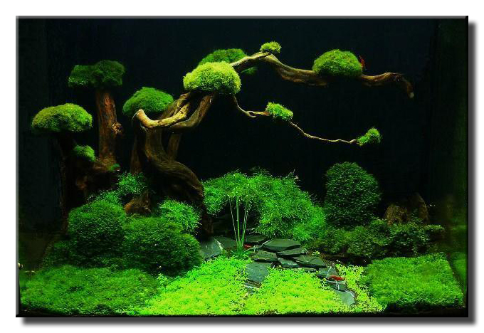 Aquascape of the month september 2009 bonsai garden aquascaping world forum - Gallery aquascape ...