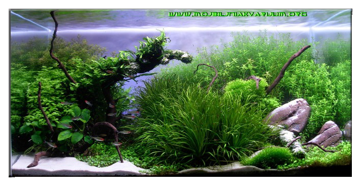 "December 2010: Aquascape of the Month - ""Invitro Scaping ..."
