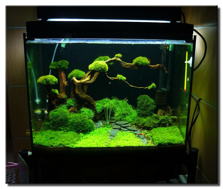 Aquariums on pinterest planted aquarium aquascaping and for Decoration zen aquarium