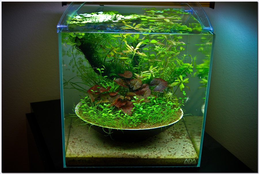 Japanese Aquascape : ... 2010 Aquascape of the Month: